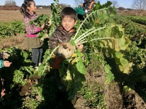 もぐもぐファーム 第4回大根・かぶ収穫と大根鍋